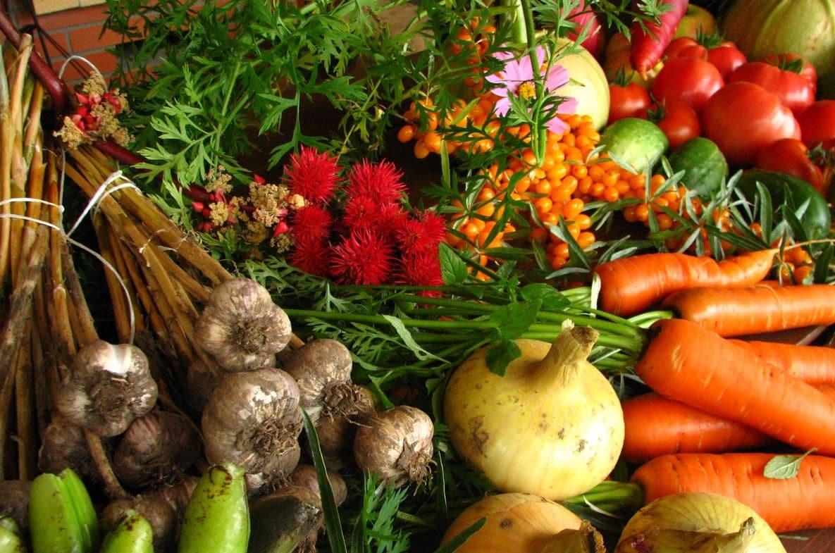 Quels sont les nombreux avantages de la nutrition vegan ?