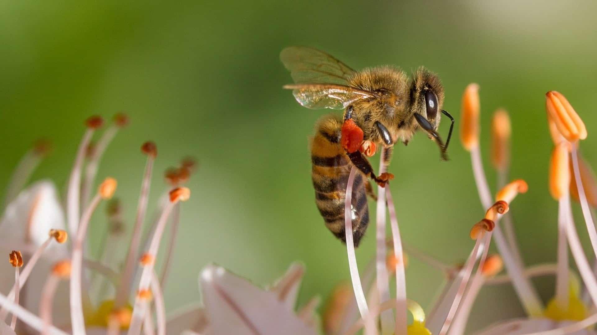 Quelles sont les vertus du miel ?